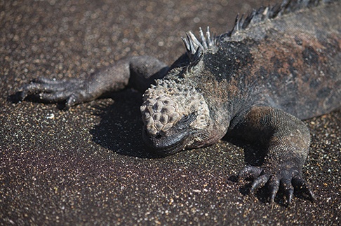 Saying goodbye to the Galapagos
