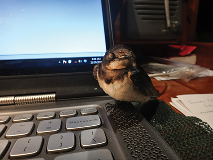 Bird sleeps on my computer