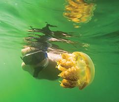 Jim snorkels in Jellyfish Lake