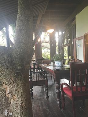 Veranda of Parrot Party