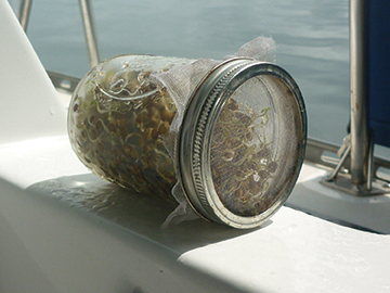 Sprouting in a Jar
