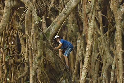 Towering banyans throw down incredible root systems on Tanna