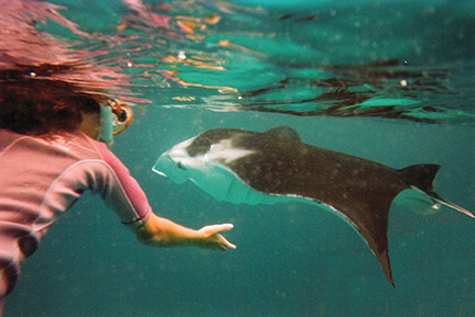 One of the most memorable experiences in the Marquesas is to visit the manta rays of Hanamoenoa Bay (Tahuata)