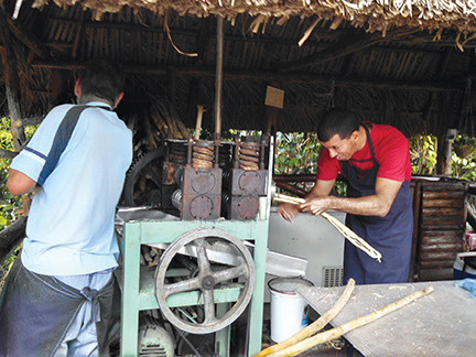 Guarapo, pressed sugar cane juice, is a popular drink that is said to lower cholesterol.