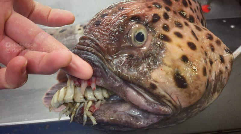 Weird Fish Images 10