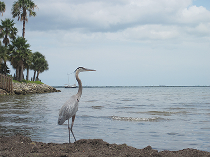 Florida_5042