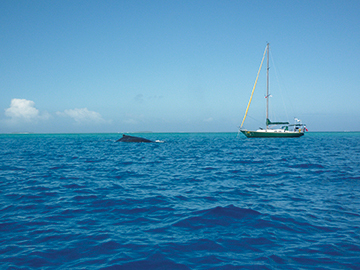 August 2013, Tonga 065