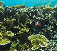 Hello little anenomefish
