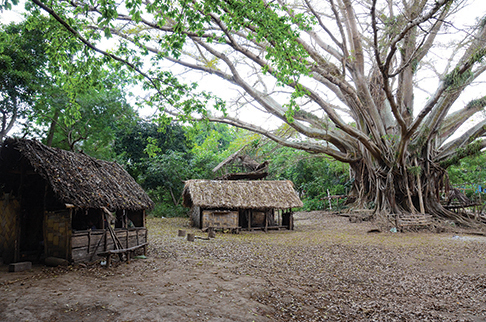 Each village has a nakamal and gathering spot usually under a huge banyan tree