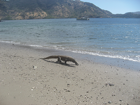 Komodo Dragon and Miss Jody anchored off of Rinca Island, Indonesia
