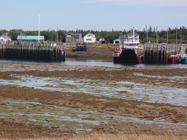 Whitehead harbor entrance at low tide