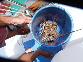 Coco  Banderas Rio diablo 072
