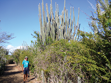 Trail on Isla Caja de Meurtos